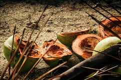 Green shells of coconuts Stock Image