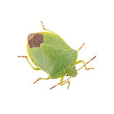 Green shield bug on a white background Royalty Free Stock Photography