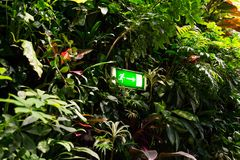 Green shining exit sign on living green wall, vertical garden. Green shining escape exit sign on living green wall with flowers and plants, vertical garden Stock Images