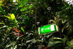 Green shining exit sign on living green wall, vertical garden. Green shining escape exit sign on living green wall with flowers and plants, vertical garden Stock Photos