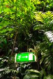 Green shining exit sign on living green wall, vertical garden. Green shining escape exit sign on living green wall with flowers and plants, vertical garden Stock Photography