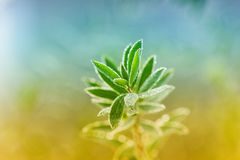 Green shoot with dew drops, natural ecological bac Stock Photography