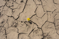 Green shoot grow through Dry cracked yellow land,new life,new hope,breakout,break through,breakthroughs,RESCUED FROM DESPERATION,b royalty free stock photo