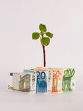 Green Shoots with money. Green Shoots with Euros/Money Stock Photos