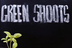 Green shoots Royalty Free Stock Photos