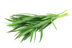 Green shoots of tarragon. On white background Stock Image