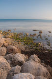 Green Shore. Rocks on the shore of the beach of Key West Stock Photo