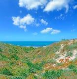 Green shore Stock Photo