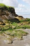 Green shoreline and mossy rocks. Green grass shoreline and mossy rocks in state beach park Royalty Free Stock Photo