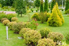 Green shorn plants for the decoration of flower beds and lawns. In the landscape of the city Stock Images