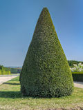 Green shrub. Conical evergreen trimmed shrub in Versailles garden, France stock images