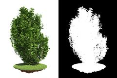 Green Shrub with Detail Raster Mask. Royalty Free Stock Images