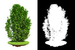 Green Shrub with Detail Raster Mask. Stock Images