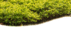 Green shrub fence Royalty Free Stock Photos