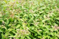 Green shrub Stock Photo
