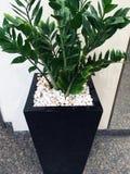 Green Shrub Pot Plant Stock Photos