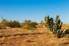 Green shrub in the Sahara desert. Morocco Stock Photography