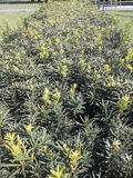 Green shrub Stock Photos