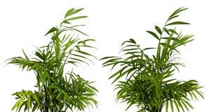 Green shrub on white Stock Photo
