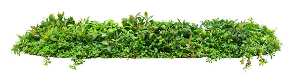 Green shrub Stock Photos