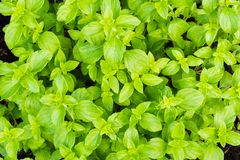 Green Shrubbery Stock Photo