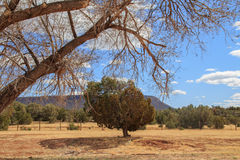 Green shrubs in a brown landscape Stock Photos