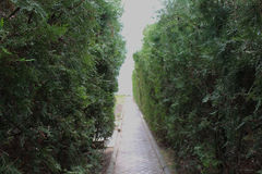 Green shrubs and a narrow path. Lit. light in the end of tunnel. enter to sea beach Royalty Free Stock Photos