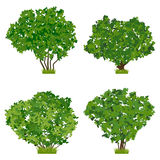 Green shrubs vector set Royalty Free Stock Photography