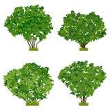 Green shrubs vector set Royalty Free Stock Photography