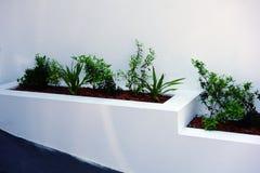 Green Shrubs in White Garden Box Stock Photo