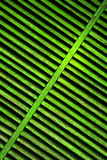 Green shutter Stock Images