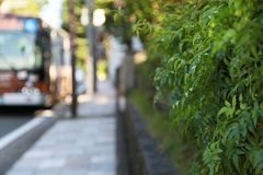 Green by the sidewalk Stock Photography
