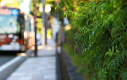 Green of the sidewalk side. Scenery of the leaf of bus and the sidewalk side of the day of the fine weather Stock Photography