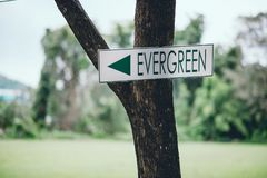 Green sign Stuck on a green tree to tell the way. And the appropriate area of action. royalty free stock photo