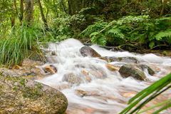 Green and silk. Water slides smoothly between vegetation Royalty Free Stock Photo