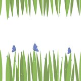 Green simple green grass on top and bottom card with blue transparent water drops with blue butterflies freshness insects isolated. Green simple green grass on stock illustration