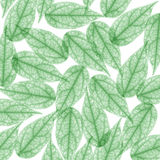 Green Skeleton Leaf for background. X-ray Royalty Free Stock Photography