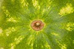 Green skin of the watermelon Stock Photography
