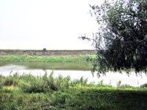 Green skogen och floden Arkivbilder