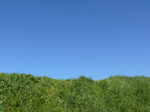 Green and sky. Wilderness green and blue sky stock images