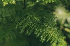 Green slender leaves on a blurred background stock photo