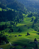 A Green Slope. Taken at Grindelwald, Swiss Stock Photography