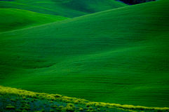Green slopes Royalty Free Stock Image