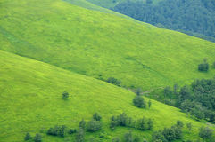 Green slopes with some trees Royalty Free Stock Image