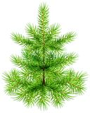 Green small Christmas pine fir tree Stock Photography