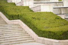 Green small pine tree on the steps. Mall green pine trees growing on the steps Royalty Free Stock Photography