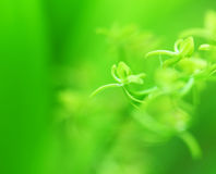 Green small plant Stock Image