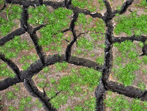 Green small plant growing on cracked ground. Royalty Free Stock Photo
