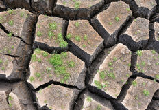 Green small plant growing on cracked ground. Royalty Free Stock Images