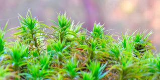 green plants closeup royalty free stock photography